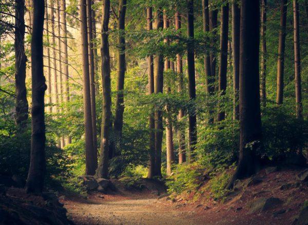 KÄÄPÄ Health – funktionaalisia sieniä Pohjolan metsistä