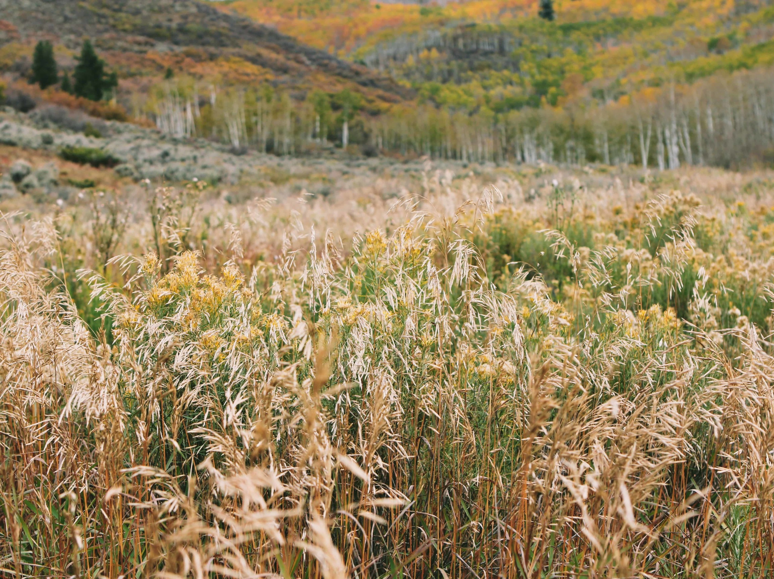 2015-02-Life-of-Pix-free-stock-photos-wild-mountain-tall-grass-john-price (1)
