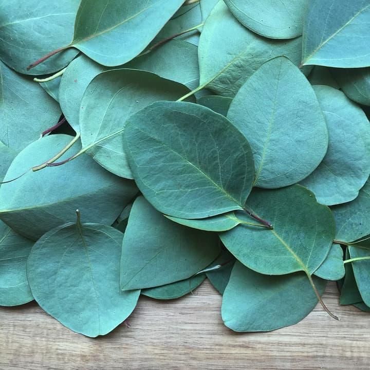 Eucalyptus eteerinen öljy