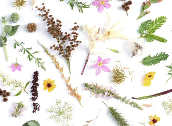 PURistin päiväkirja – osa 9: Kukkatipat, uudistuminen ja irtipäästäminen