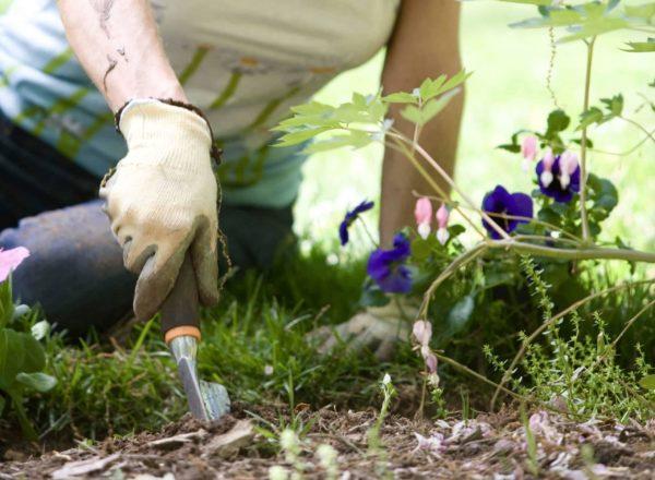 Puutarhanhoidon 7 yllättävää terveyshyötyä