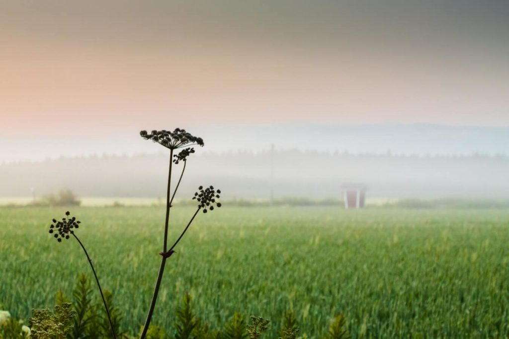 Estrogeenidominanssi vähenee kun pääsee rentouttavaan tilaan kuten kuvan pellolle