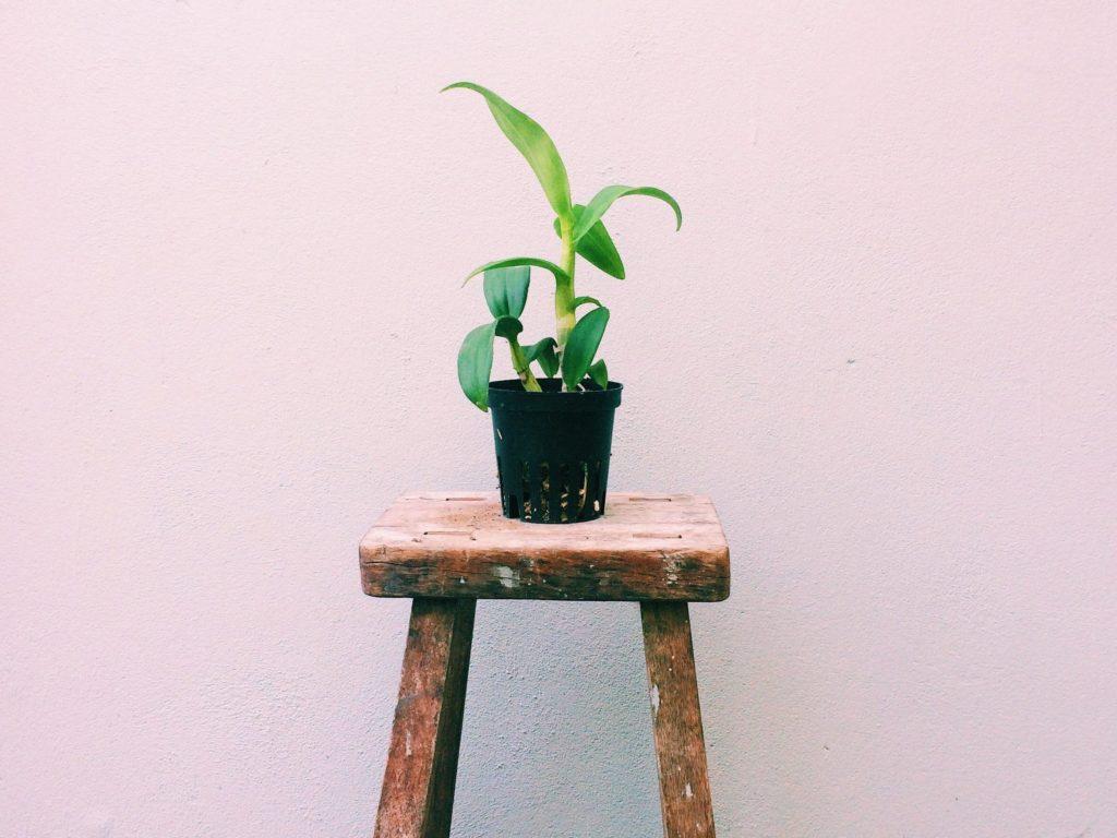 Vuoden 2019 terveystrendeissä näkyy vihreät kasvit mm. kitchari. Kuvassa oleva kukka kuvastaa raikkautta ja terveyttä.