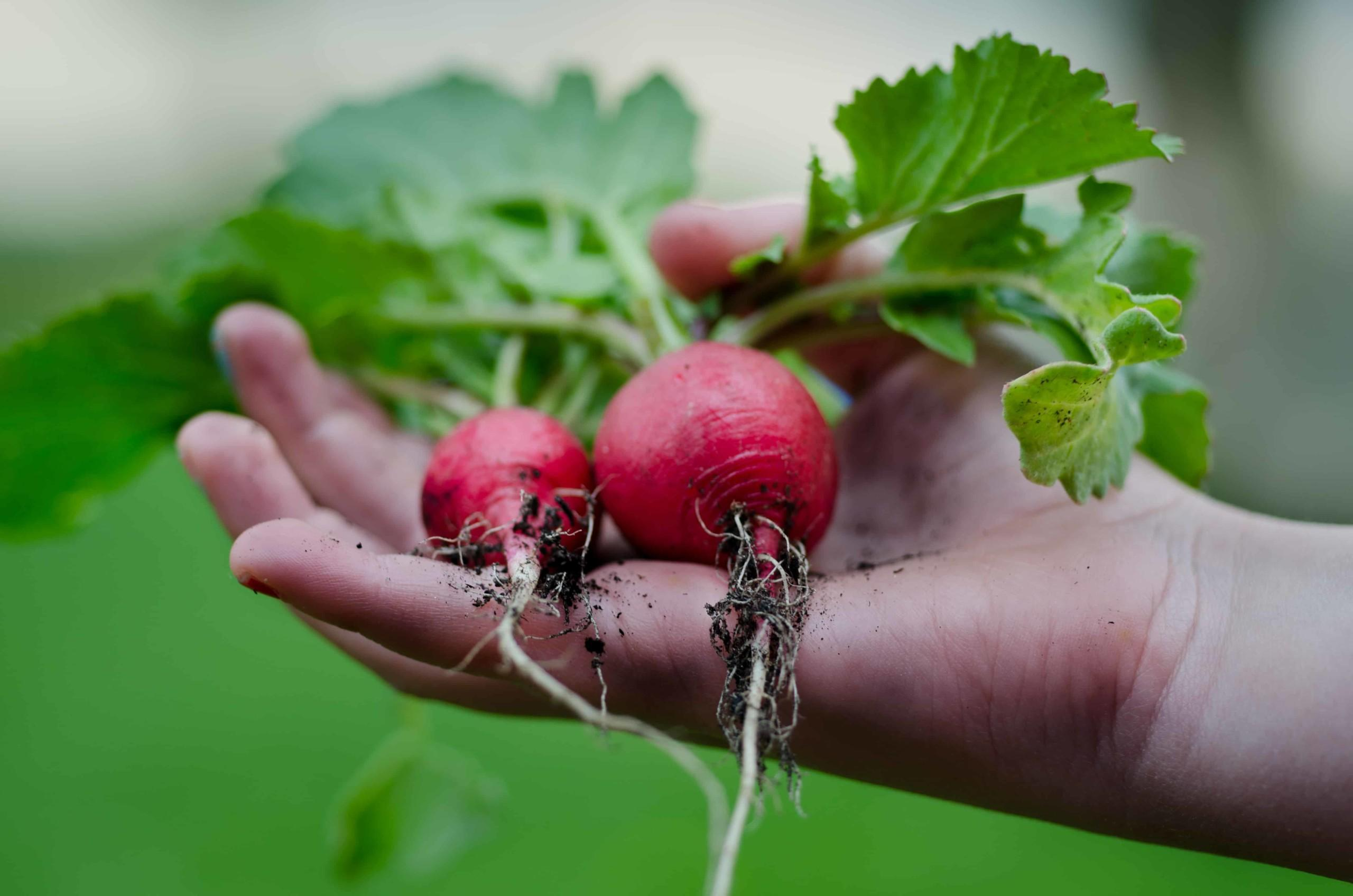 puutarhanhoidon yllättävät terveyshyödyt