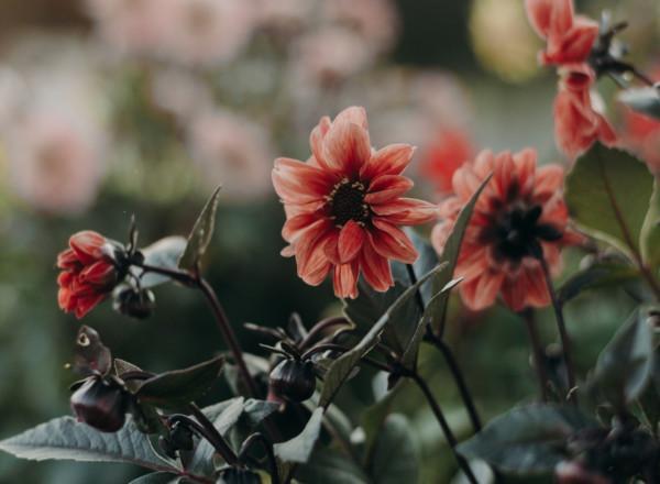 Kevään riemut ja haasteet – ayurvedinen näkökulma
